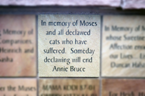 A Memorial for Moses at the Humane Society of Boulder Valley.